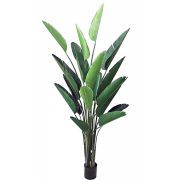 BIRD OF PARADISE TREE 250CM