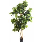FIDDLE LEAF TREE 2000MM