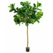 FIDDLE LEAF TREE 2700MM