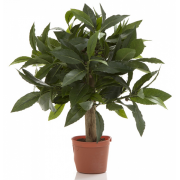 LAUREL BALL TREE 25cm