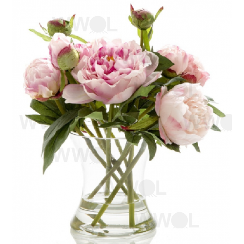 Peony in Water in Glass Vase Dark Pink