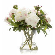 Peony in Water in Glass Vase White