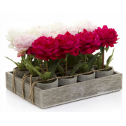 Peony Spray in Pot 12 Piece Tray