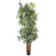 RAPHIS PALM 2400MM