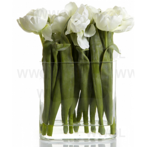 Tulip in Water in Rectangle Glass Vase White